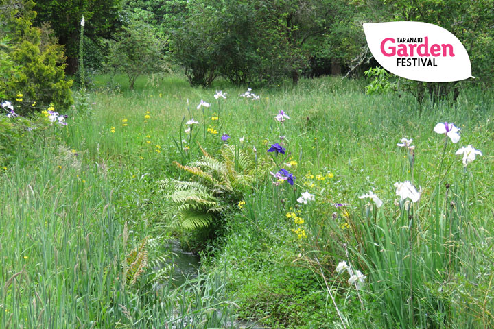 gardenfest2020-npdc-event-images_11_m10gss_meadow-theory-101.jpg
